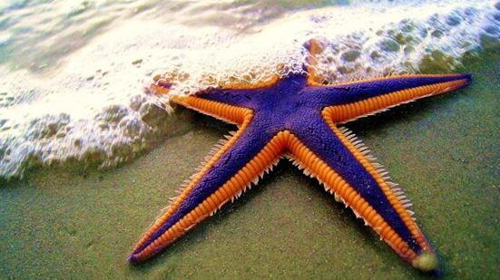 2014-09-02 Starfish